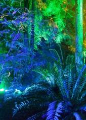Enchanted snapshot copy